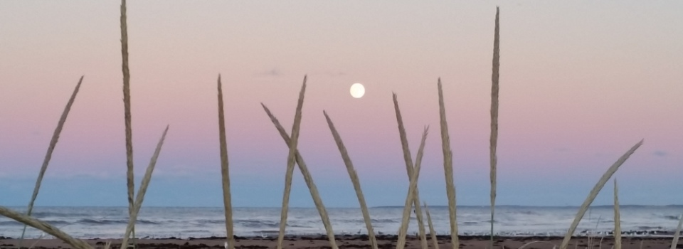North Rustico Beach, PEI by Dale Harman